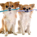 علاج اسنان الحيوانات الاليفة Dental Scaling
