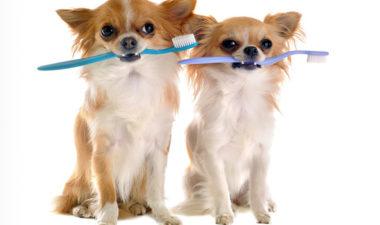 Pet Dental Care علاج اسنان الحيوانات الاليفة