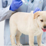 Program of cat vaccinations ,dogs and pets