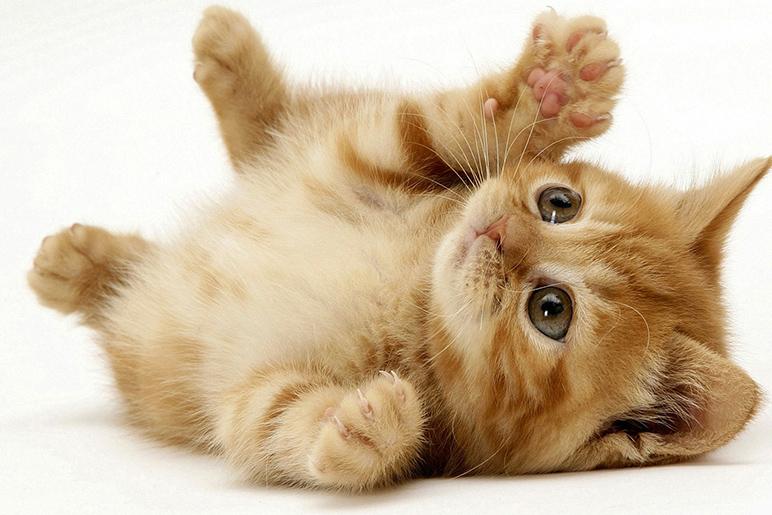 cat neutering تعقيم الحيوانات الاليفة