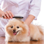 pet care and Beauty services