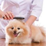 خدمات تجميل ورعاية الحيوانات الأليفة