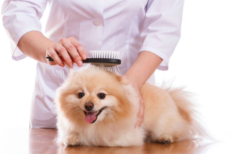 pet beauty and pet care