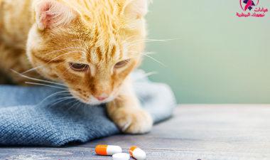 5-ادوية-بيطرية-لا-يخلو-منها-منزلك-.
