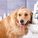 افضل اماكن تطعيم الكلاب في مصر