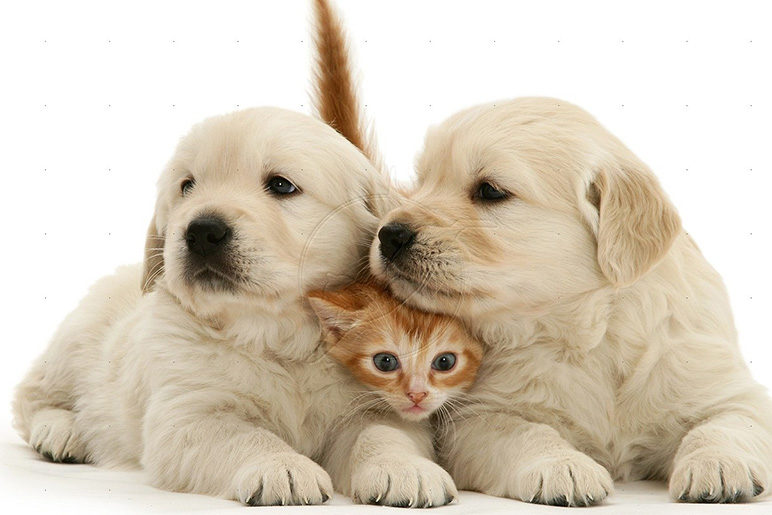 التخلص من الطفيليات المعوية و علاج الديدان للحيوانات الاليفة