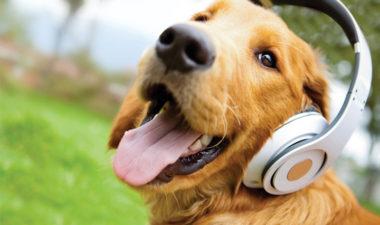 علاج ديدان الكلاب