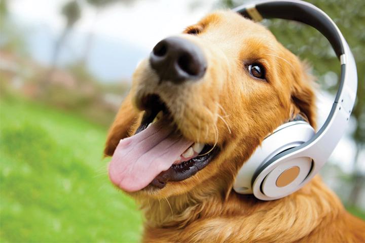 علاج ديدان الكلاب والطفيليات المعوية | دواء للديدان للكلاب | عيادات نيويورك  البيطرية