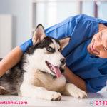 علاج اذن الكلاب - أفضل عيادات بيطرية في المعادي